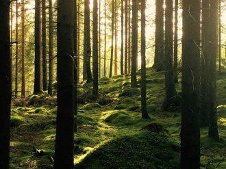 wilderness wellness wicklow ireland